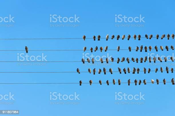 Photo of Individuality concept, birds on a wire