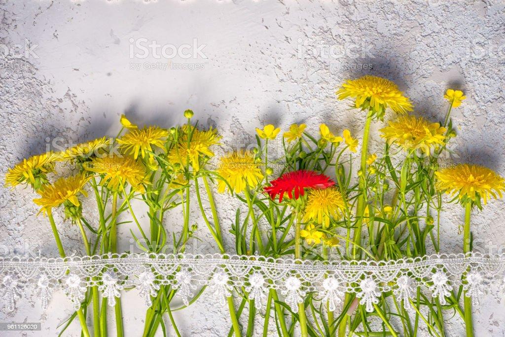 notion d'individualité: pissenlit entre rouge jaune ceux ordinaires, top vue nature morte avec espace copie ci-dessus. photo libre de droits