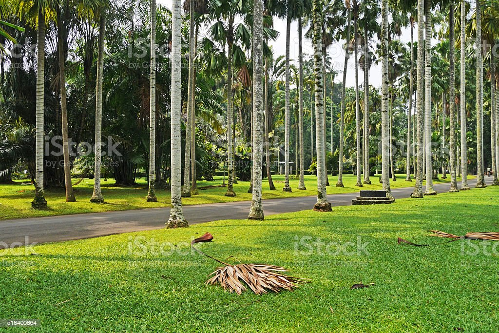 Indonesia West Java Bogor Botanical Garden Stock Photo & More ...