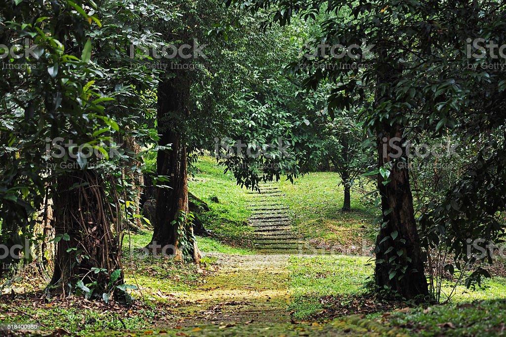 Albero Di Natale Java.Indonesia West Java Giardino Botanico Di Bogor Fotografie Stock E