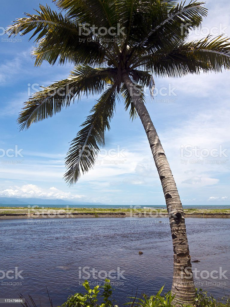 Indonesia, West Papua, coastline and coconut palm. royalty-free stock photo