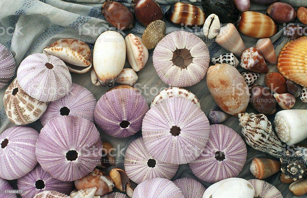 Indonesia, West Sumatra Province, Mentawai Islands, shells. stock photo