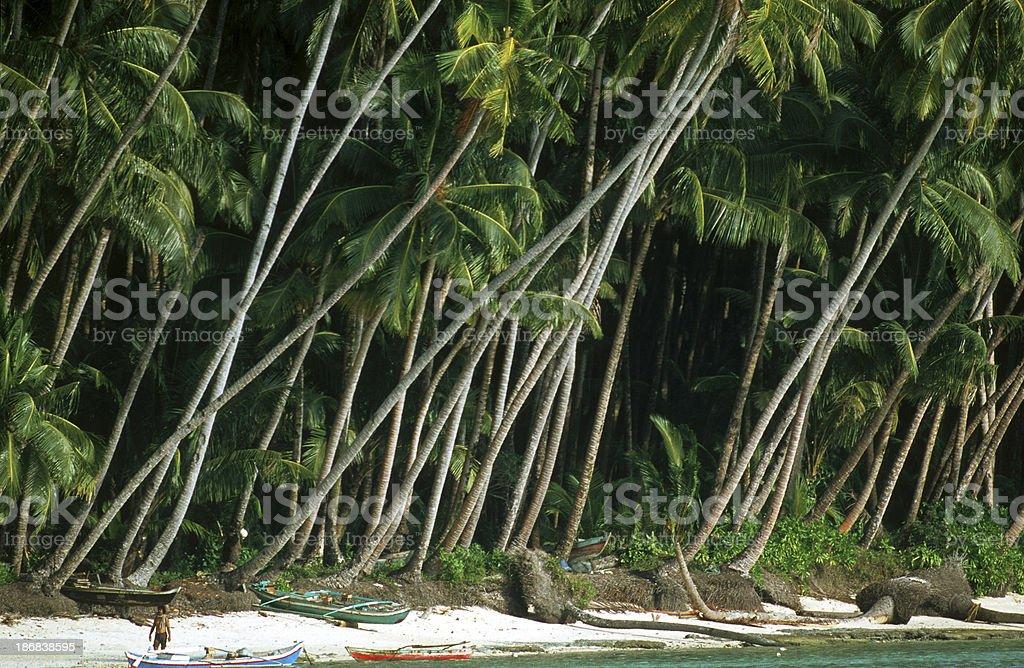 Indonesia, West Sumatra Province, Mentawai Islands, tropical island. stock photo
