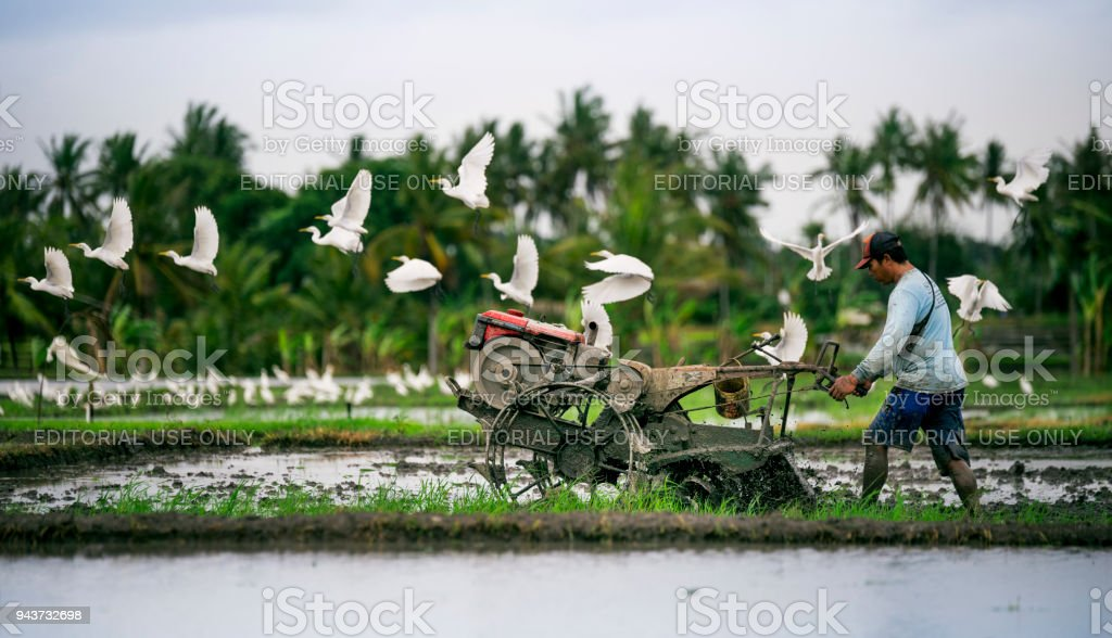 Indonesian farmer farming his farm. stock photo