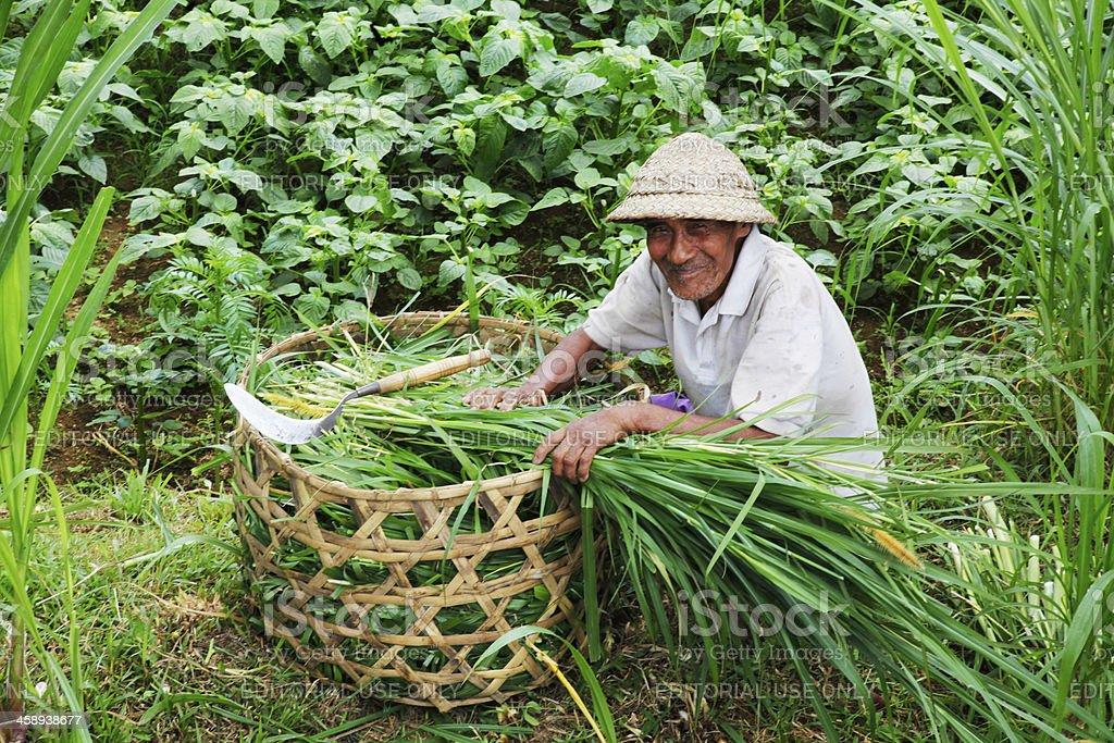 Indonesian Farmer stock photo