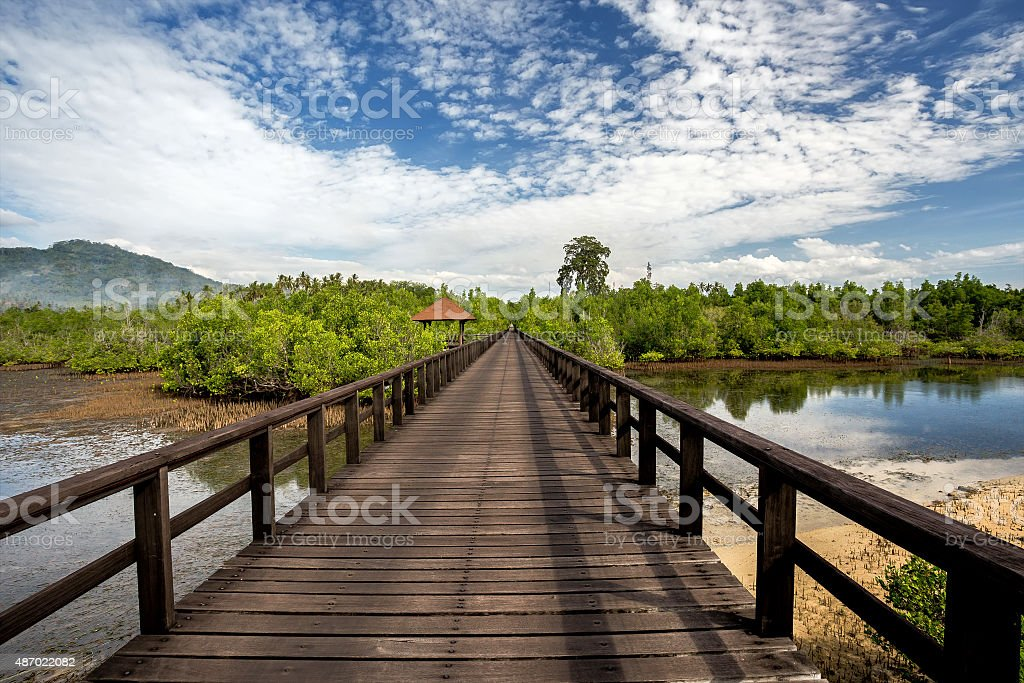 Indonesian landscape with mangrove and walkway stock photo
