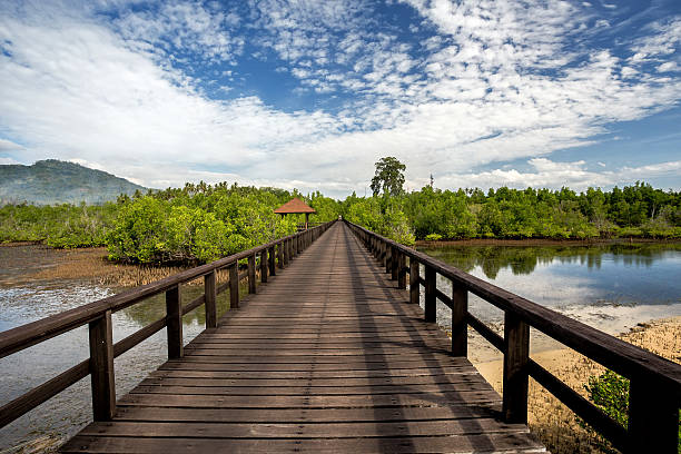 Indonesian landscape with mangrove and walkway Traditional Indonesian landscape with mangrove and walkway, Sulawesi, Manado, indonesia manado stock pictures, royalty-free photos & images