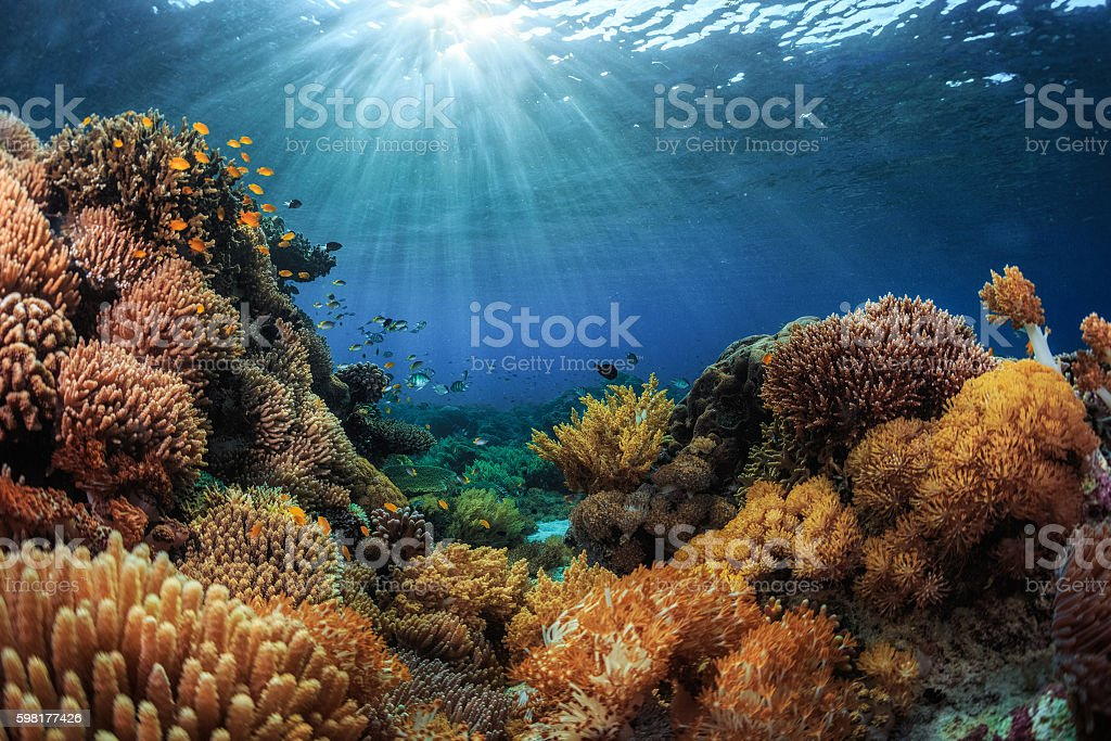 Indonesia stock photo