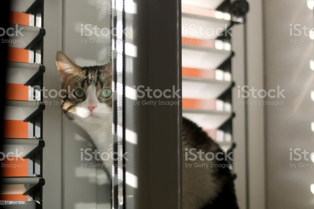 Indoor Cat stock photo