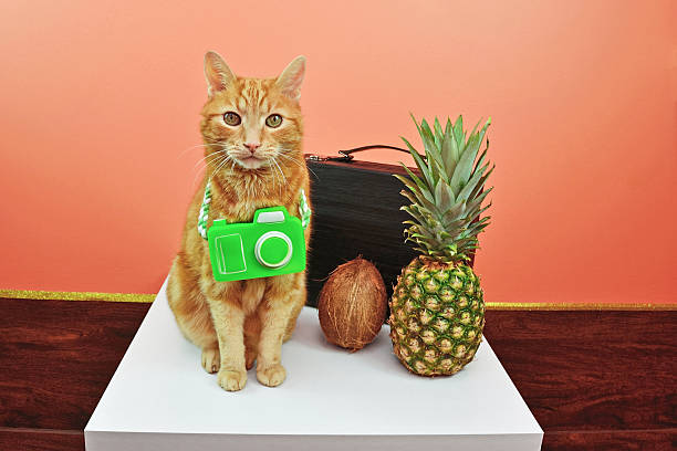 Indoor Cat Wants Tropical Vacation stock photo