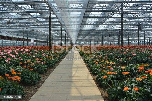 Indoor garden with wooden pavement footpath,