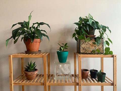 Houseplants arranged on shelf