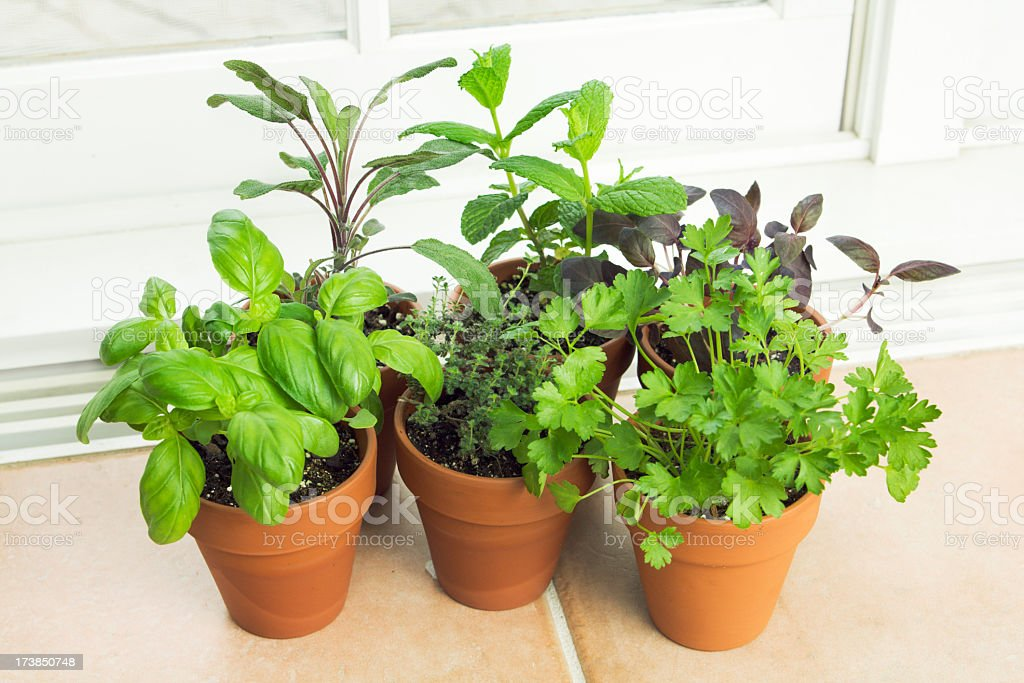 A potted herb garden with a collection of herb by the window.