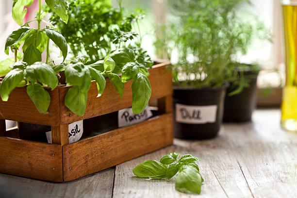 indoor herb garden, potted container plant by window sill - dereotu stok fotoğraflar ve resimler