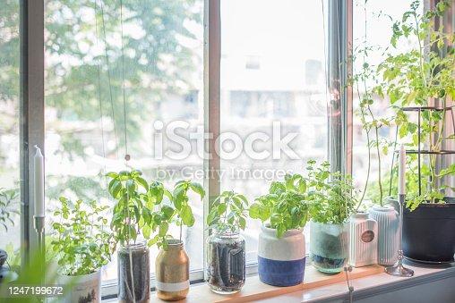 Herb, Flower Pot, Herb Garden, Indoors, Plant