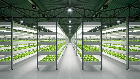 Indoor hydroponic vegetable plant factory in exhibition space warehouse. Interior of the farm hydroponics. Vegetables farm in hydroponics. Lettuce farm growing in greenhouse. Concrete floor. 3D render