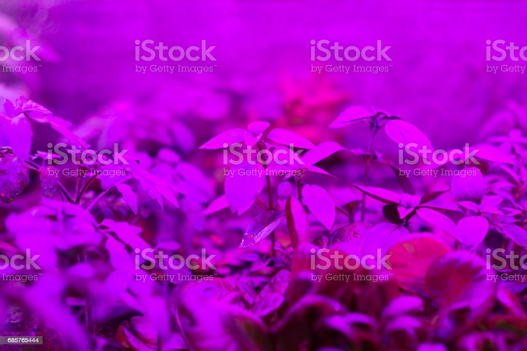indoor LED grow lights for home-grows royalty-free stock photo