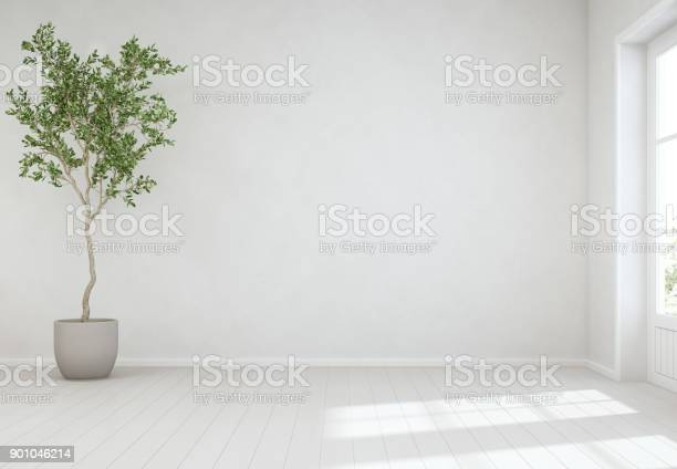 Indoor plant on wooden floor with empty white concrete wall tree picture id901046214?b=1&k=6&m=901046214&s=612x612&h=smewxvdmilru28xke5jiqhikfzswlnkqedrjpxr8atq=
