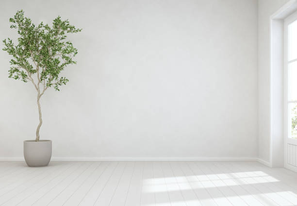 Indoor plant on wooden floor with empty white concrete wall background, Tree near door in bright living room of modern scandinavian house stock photo