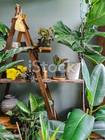 Indoor plants interior room