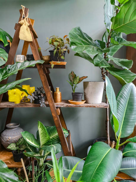 kamerplanten interieur kamer - kamerplant stockfoto's en -beelden