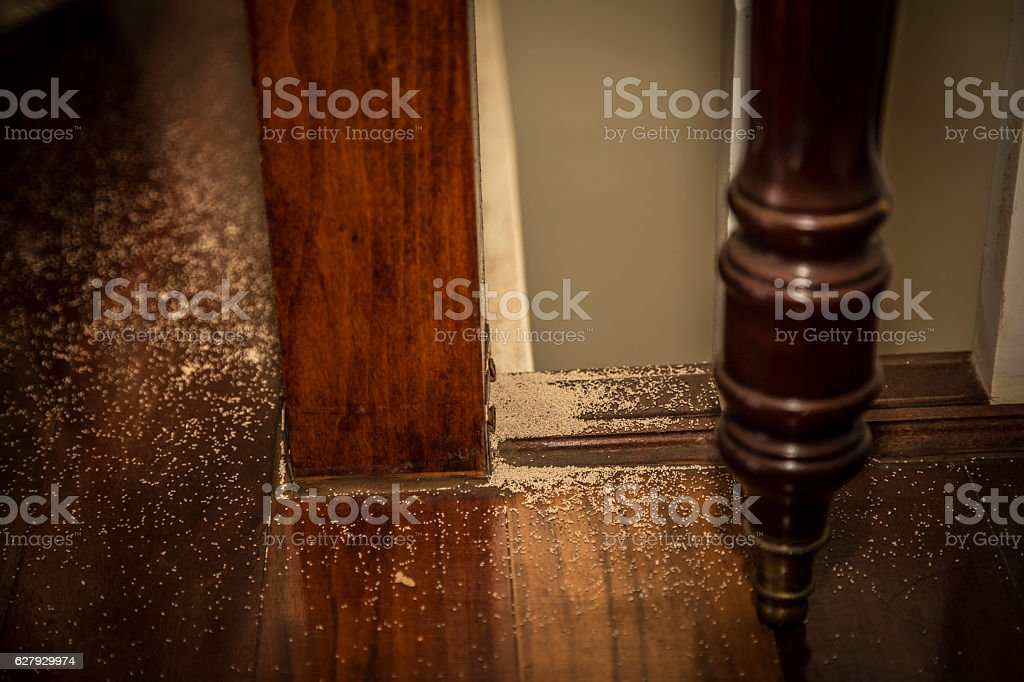 Indoor Termited Dropping stock photo