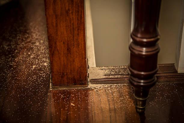indoor termited dropping - termietenheuvel stockfoto's en -beelden