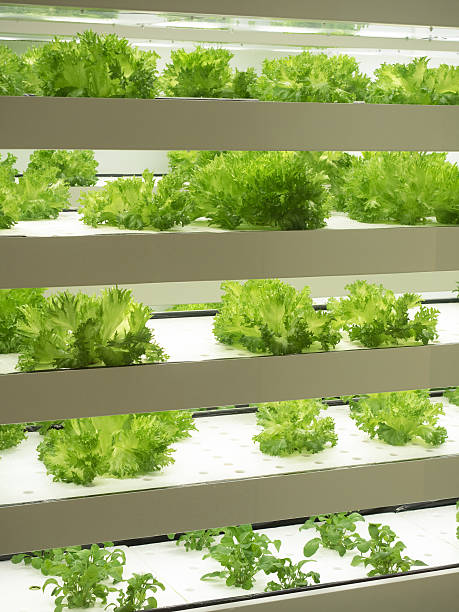 fábrica de legumes coberta - vertical - fotografias e filmes do acervo