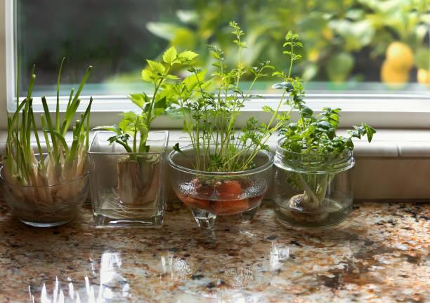 overdekte watertuin - bosui stockfoto's en -beelden