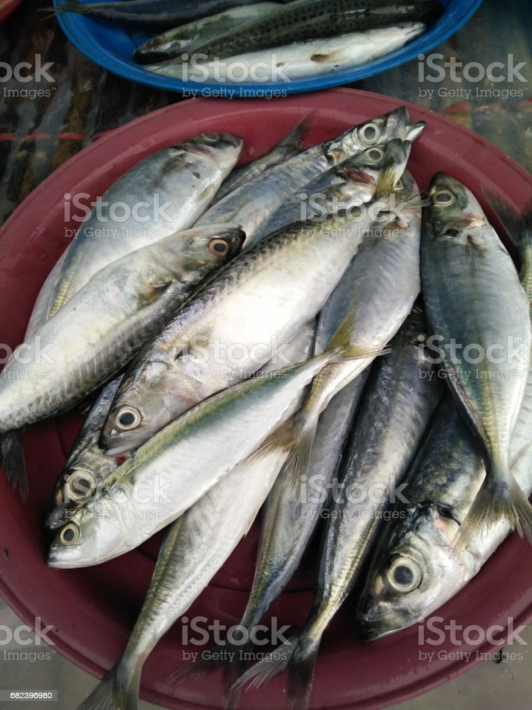 Indo-Pacific mackerel fresh food raw material from sea at Thailand  market photo libre de droits