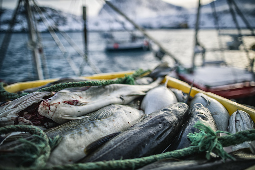 Industrial fishing of cod in Northern Norway: winter landscapes