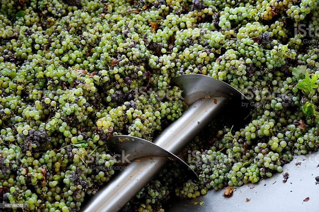 Industrial grape processing stock photo