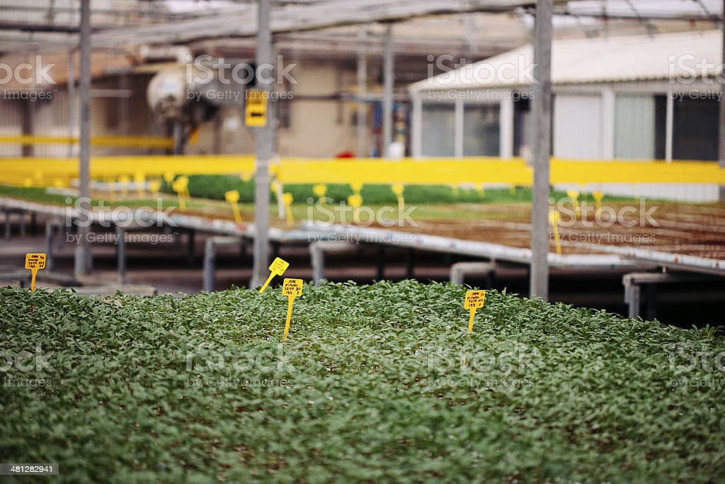 Industrial greenhouse royalty-free stock photo