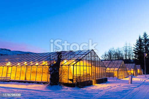 Industrial greenhouses for growing plants in winter