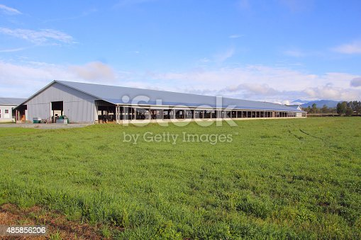 An industrial barn holding large herds of cattle and run by a company.
