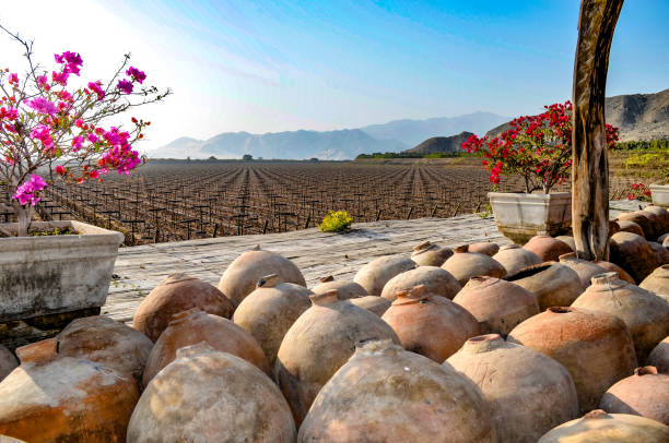 Industrial Peruvian Pisco and Wine production. Ica, Peru Industrial scale wine and pisco brandy production at the historic Hacienda Tacama vineyards near the city of Ica, Peru pisco peru stock pictures, royalty-free photos & images