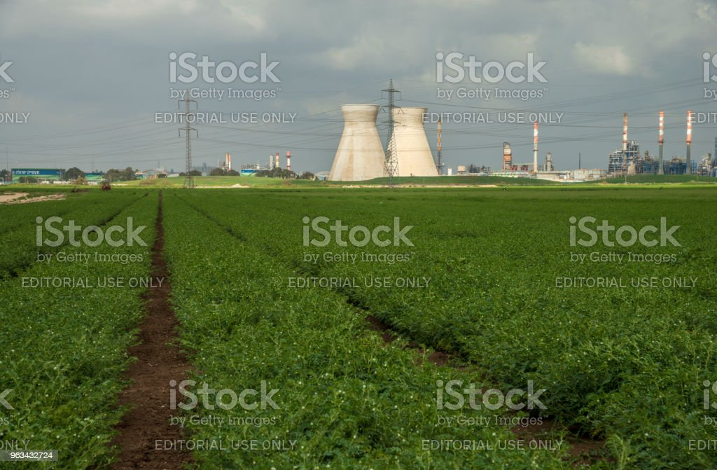 Industrial refinery coolers on a cotton field in Haifa, Israel - Zbiór zdjęć royalty-free (Bawełna)