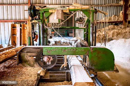 industrial wood production factory -  industrial big saw cutting trees