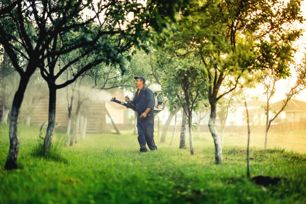 Industrial worker using mistblower for toxic pesticide distribution in fruit orchard stock photo
