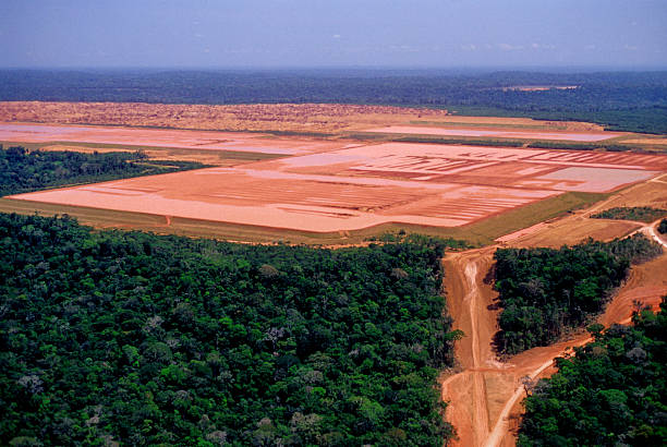 Industry in the Amazon Extraction of bauxite in the middle of the Amazon. deforestation stock pictures, royalty-free photos & images