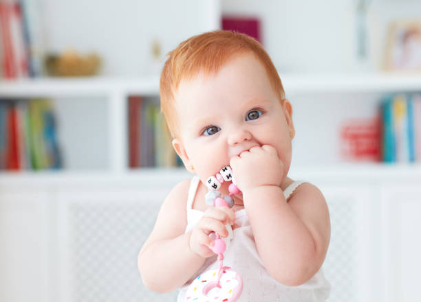 infant baby girl biting silicone nibbler toy stock photo