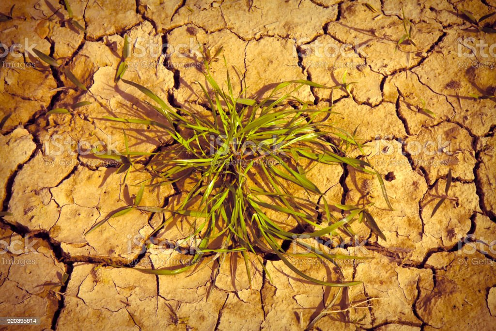 Infertile land burned by the sun: famine and poverty concept image stock photo