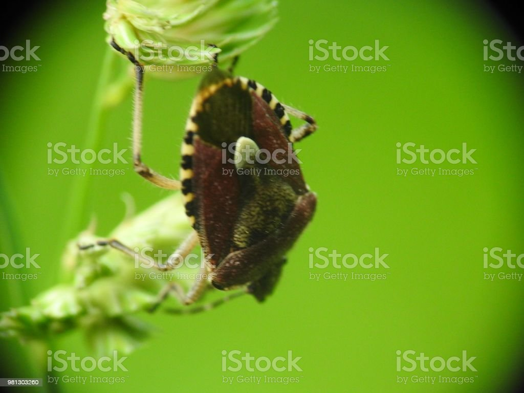 Infesting insect stock photo