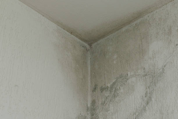 infiltration and mold on the ceiling stock photo