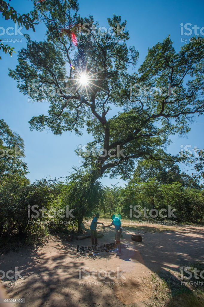 Informal Curios Business under a tree lensflare stock photo