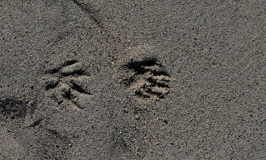 Information about Finland's largest carnivores and preditors. Footprint