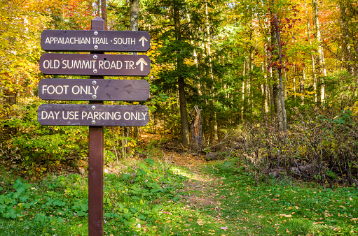 Information Wooden Signs on a Forest Path in Autumn