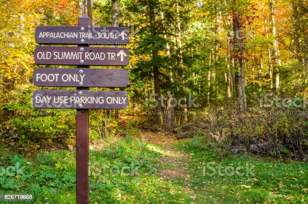 Photo of Information Wooden Signs on a Forest Path in Autumn