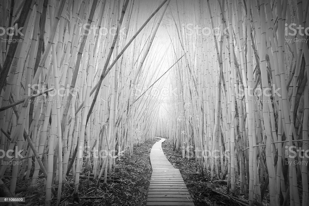 Infrared Bamboo Forest stock photo