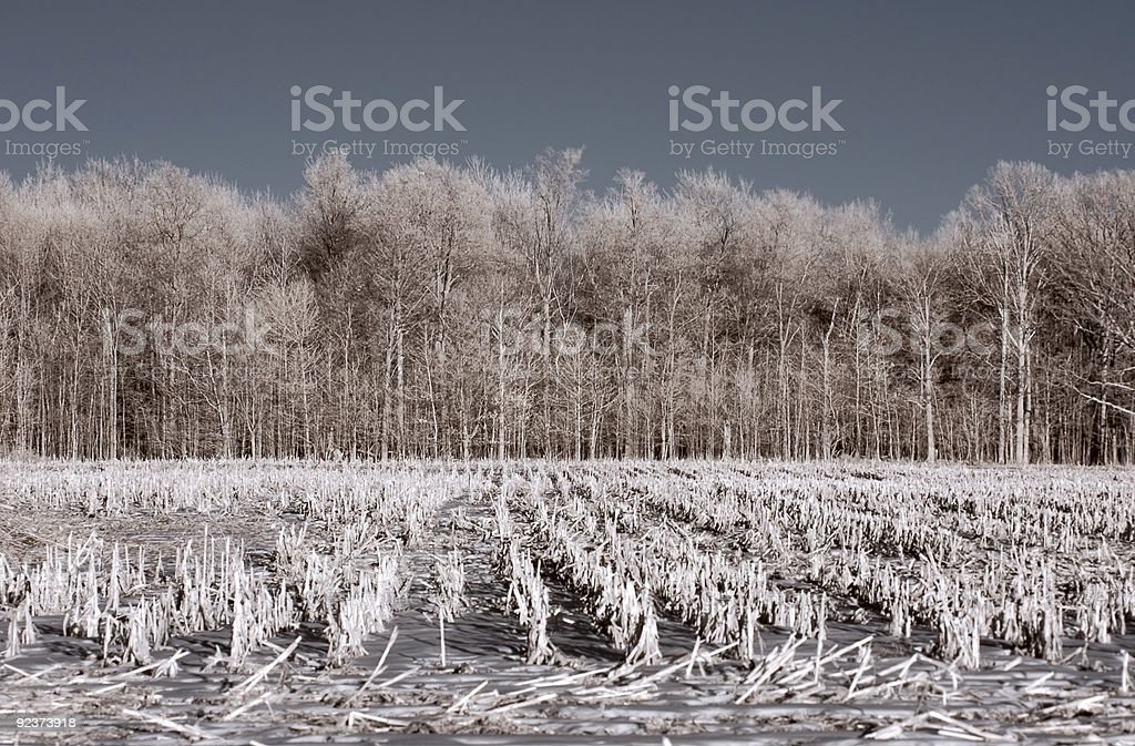 Infrared Farm - Winter Stubble royalty-free stock photo